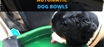 AUTOMATIC DOG BOWLS
